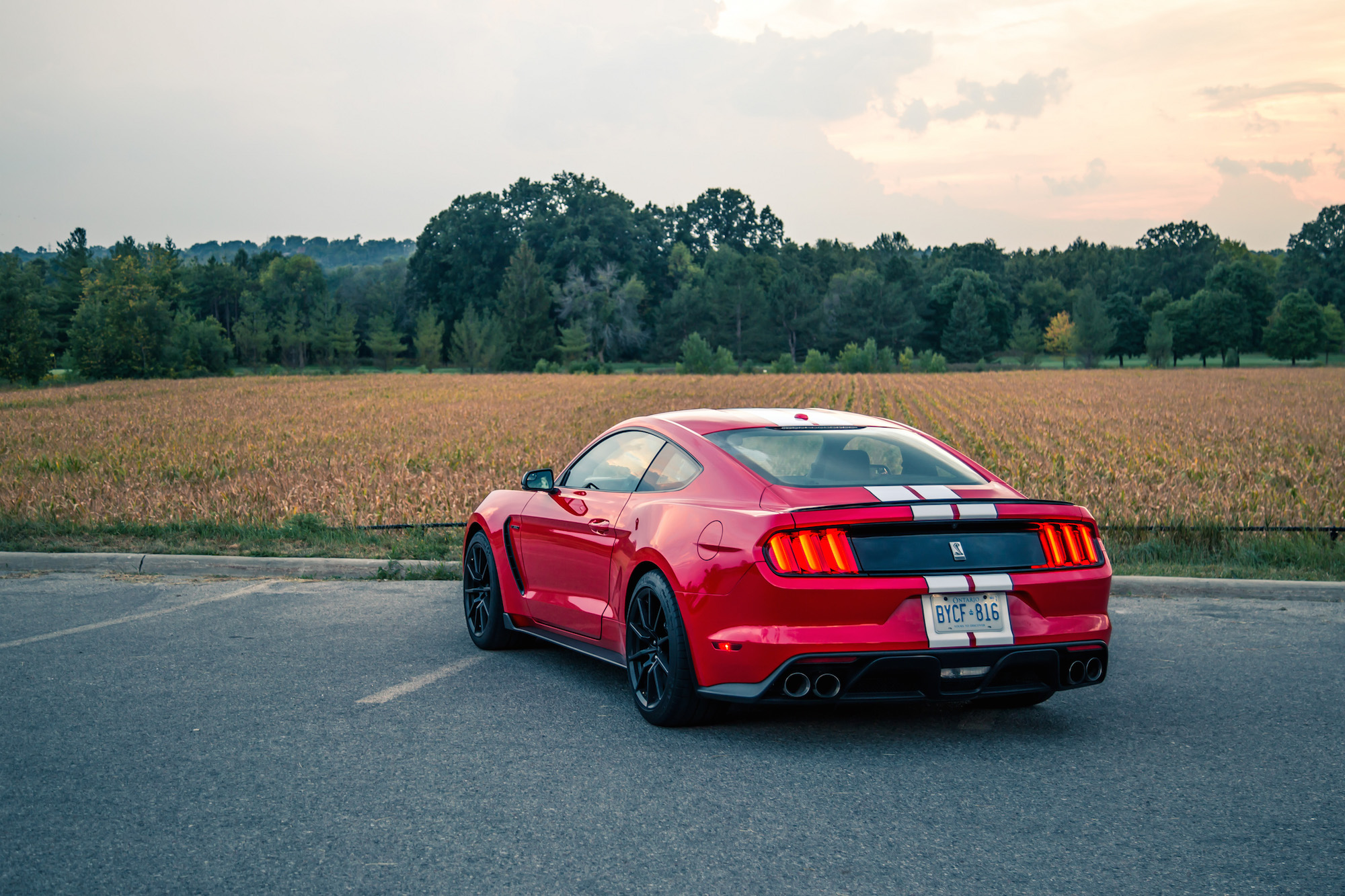 2016 ford shelby gt350 rear view canada